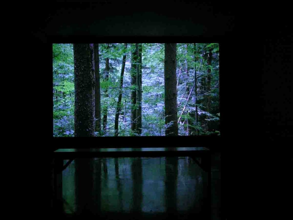 Ori Gersht, Forest, Installation View, Photographer's Gallery, 2006