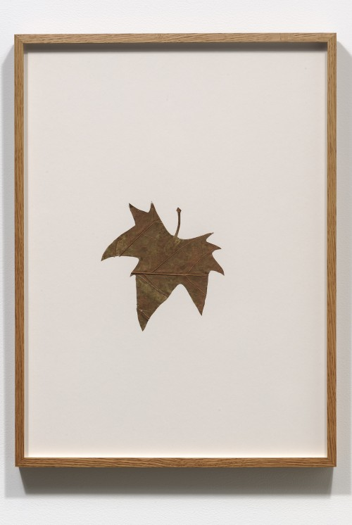 Amikam Toren, Hybrid (IV), organic material on card, 20x14 3.4 inches, 1978-9
