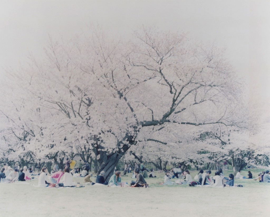 Hanami02, archival pigment, 120x150cm, 2010
