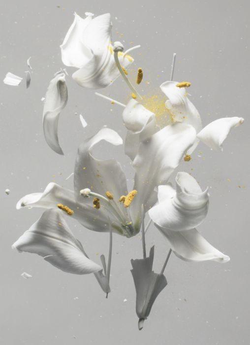 Lilium Candidum ,D01, 2018, Archival Pigment Print, 120x100cm