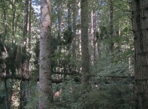 OG_The-Forest_4