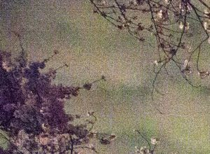 Ori Gersht, Tokyo Imperial Memories, Speck02, archival pigment, 40x35, 2010