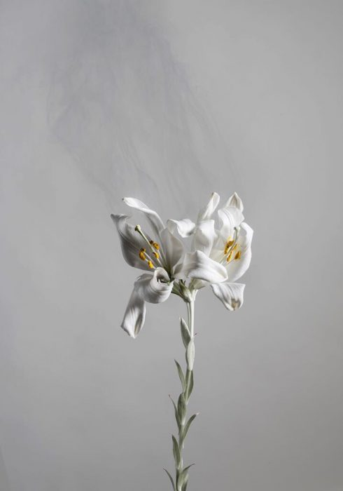 Madonna Lilly D05, 2018, Digital archival print, 170x100cm