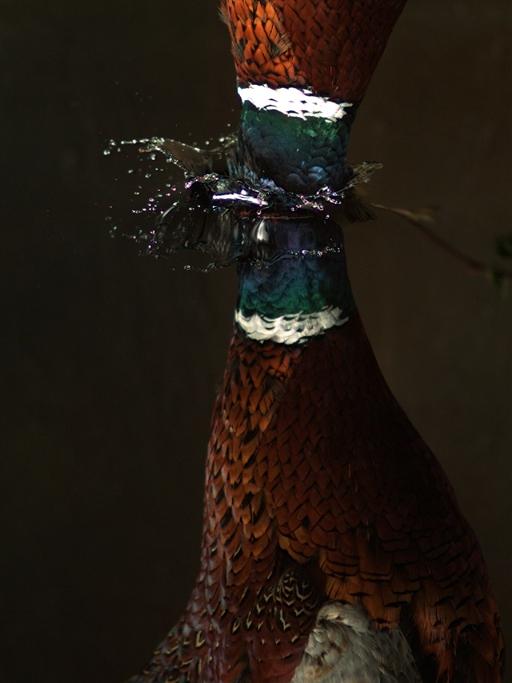 Fallin Bird, Still from video, 2008