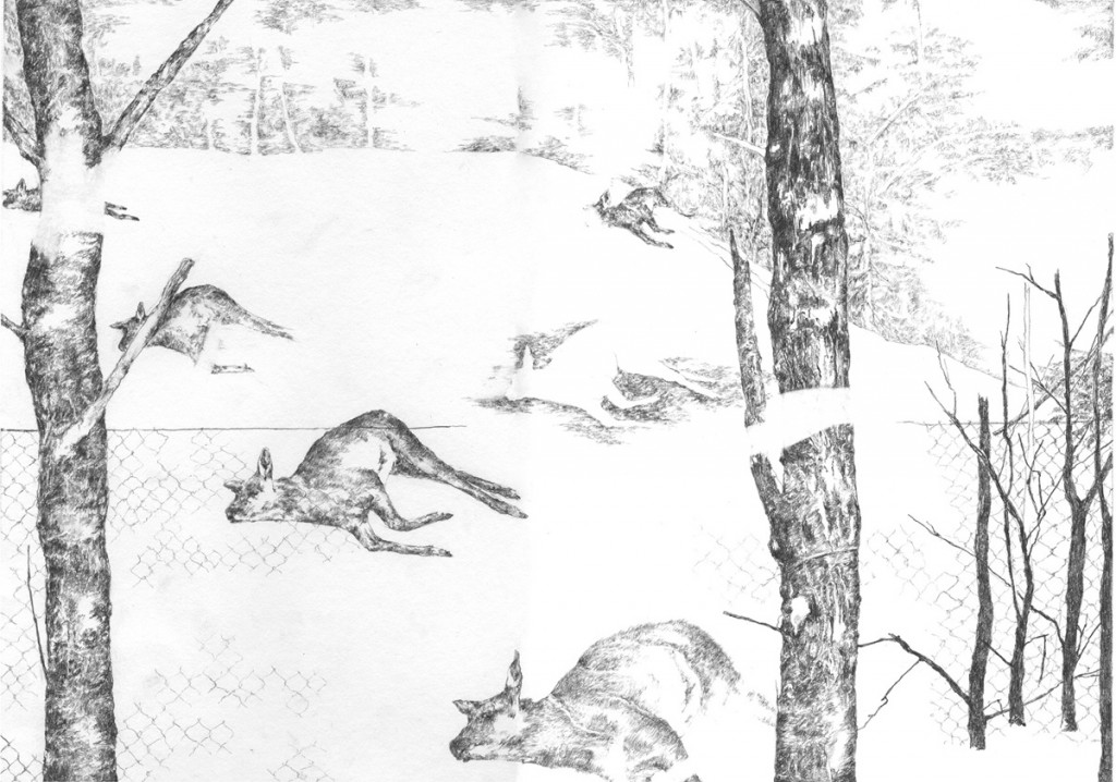 Nogah Engler, Deer Dead, Pencil on Paper, 21x30cm, 2005-2006