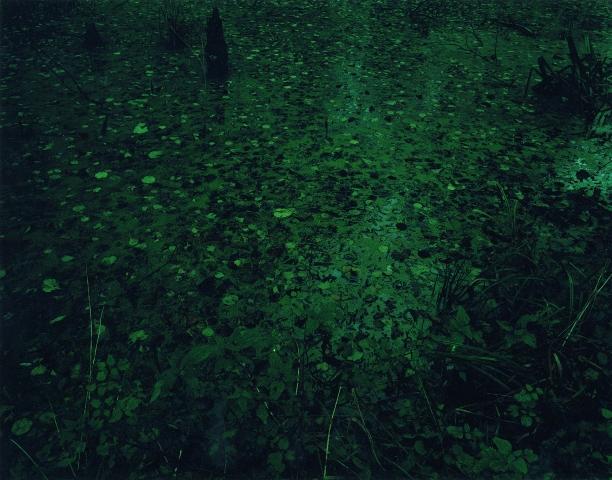 Green Swamp, 150x120 cm