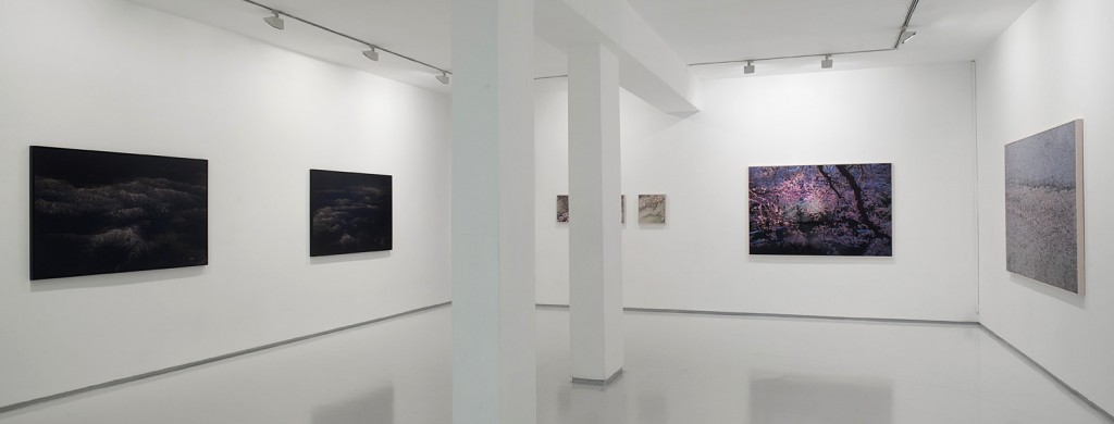 Falling Petals, Exhibition view, Daily News, Installation view, Noga Gallery of Contemporary Art, 2011