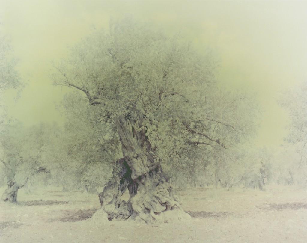 Olive 16, 150x120cm, 2004