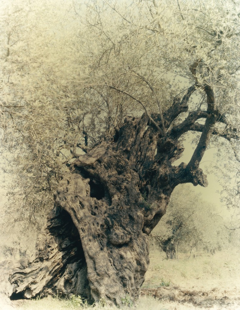 Untitled 17, 100x80cm, 2004