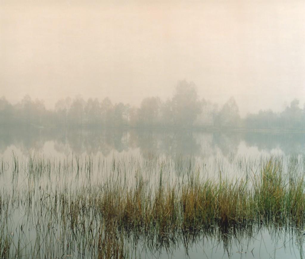 Swamp 01, 120x150cm, 2008