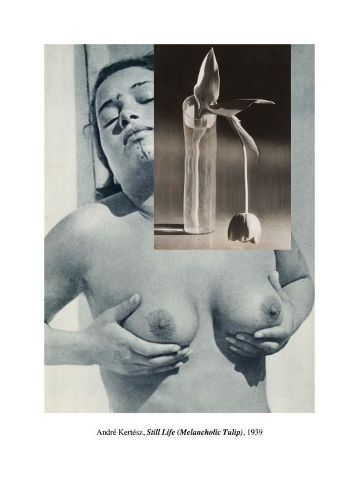 Dana Darvish_André Kertész, Still Life (Melancholic Tulip), 1939, 2014