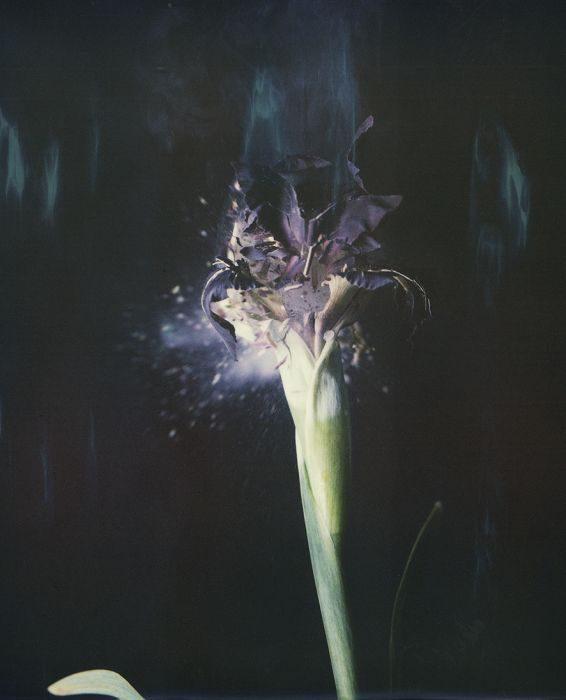 Iris Atropurpurea, P04, 2018, Archival Pigment Print, 40x30cm