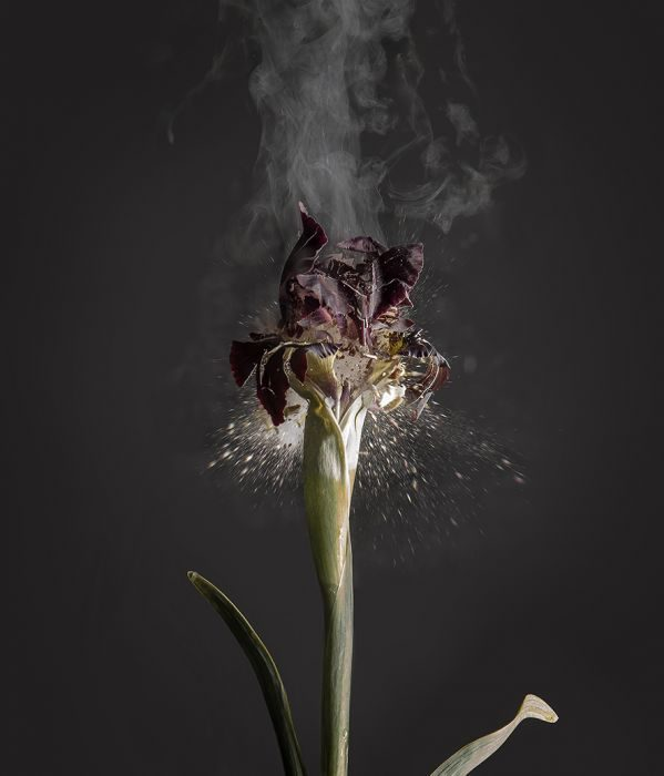 Iris Atropurpurea, D01, 2018, Archival Pigment Print, 120x100cm