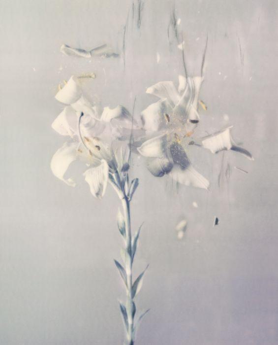 Lilium Candidum ,P01, 2018, Archival Pigment Print, 80x64cm