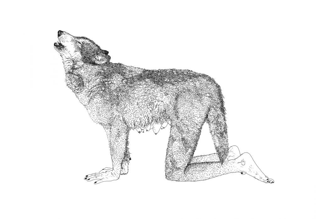 Moran Kliger,Gray Wolf, 2011, ink on paper, 90x150 cm