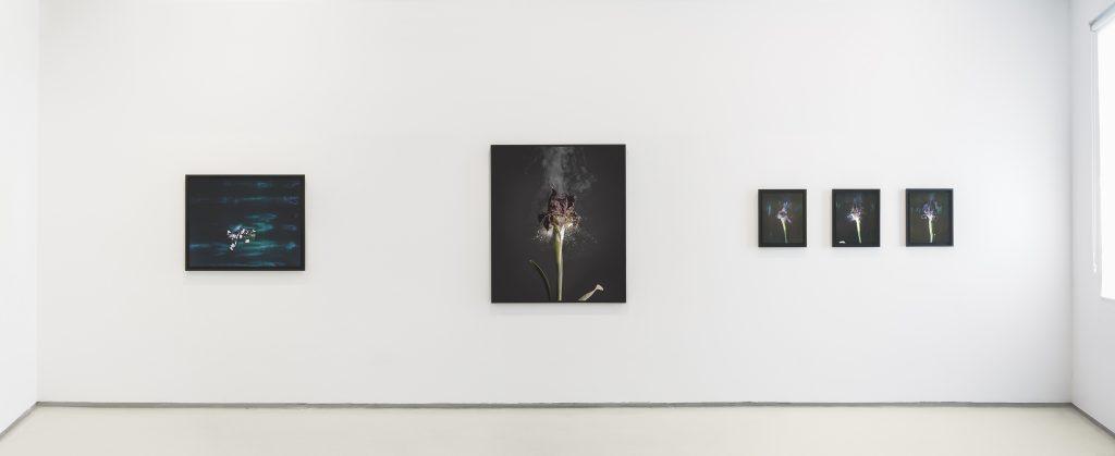Fragile Land, Installation View, Noga Gallery, 2018