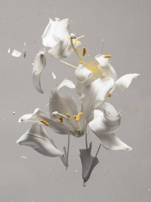 Lilium candidum D01, 2018, Archival Pigment Print, 100X120cm